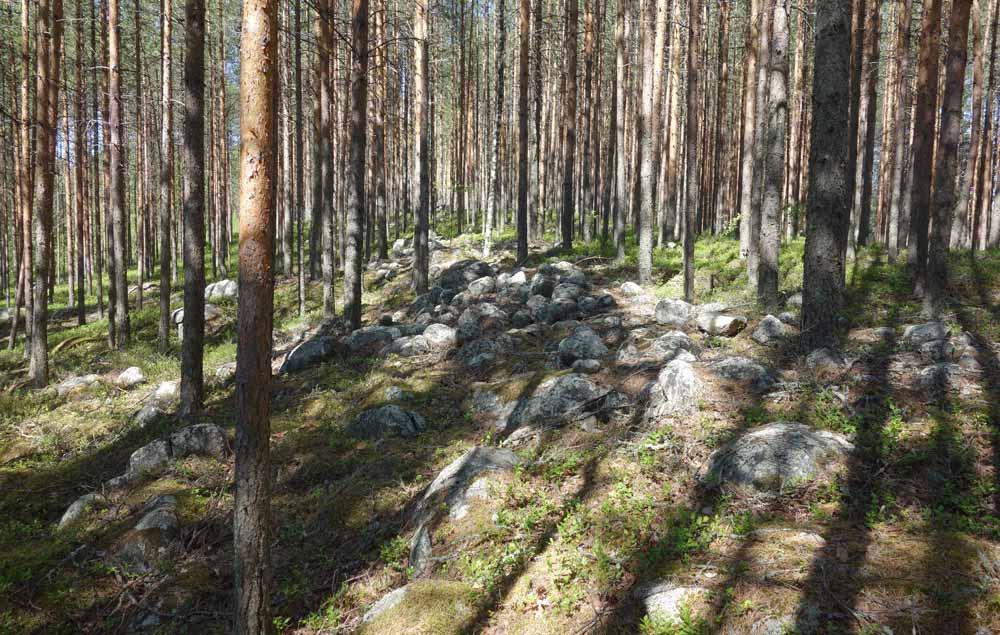 Jätinkirkon kehävallia. Valli etenee kuvassa etualalta taaemmas. Kiviaidan tyyppinen matala kivimuodostelma mäntymetsässä.