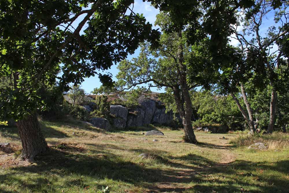 Otterböten pronssikautinen asuinpaikka suurten tammien varjossa.